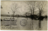 13 People taken from this tree, Cypress Avenue, Columbus, Ohio, Flood, 3-26-1913